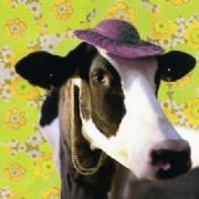 Udderly Gorgeous - Cow Greeting Card
